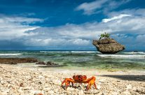 The Cove Crab I _6KW7915