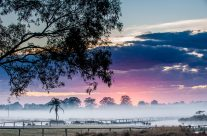 Misty Morning Colours _7KW4276