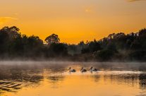 Pelican Sunrise at the Wetlands