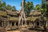 Ancient Ta Prohm _7KW8852
