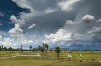 Storm Clouds over the Rice Paddy I _7KW9840
